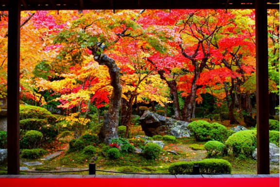 Stunning Fall Foliage